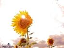 Nous sommes du soleil_1