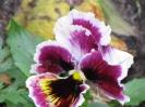 Цветы_1