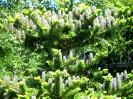 Хвойное дерево