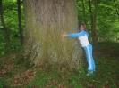Самый большой дуб в Калининградской области