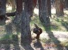 Деревья в Танцующие лесу:юная кобра