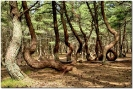 Фотограф Павел Дунюшкин - Пьяный лес_1