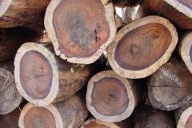Обработка древесины водой в калининграде