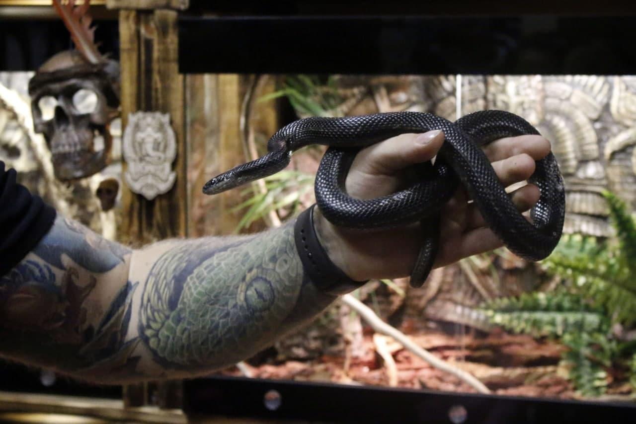 черн змея