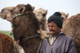 «Подорожники-8. Сказочное Марокко»: Марракеш — Ифран — Фес