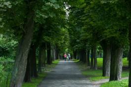 Администрация Калининграда приобретёт томограф для обследования деревьев