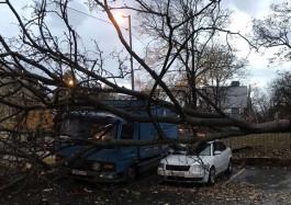 За ночь в Калининграде штормовой ветер повалил 33 дерева