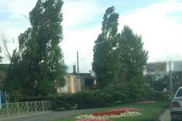 На проспекте Калинина в Калининграде упало два дерева: движение затруднено