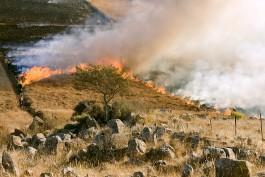 За сутки в регионе пожарные 40 раз выезжали тушить палы травы