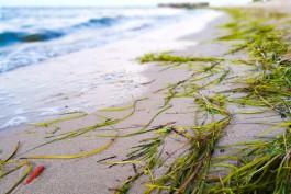 На побережье в Бразилии обнаружили бутылку с посланием от калининградских моряков