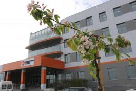 На площадке строящейся Приморской ТЭС заложили сад в честь 75-летия Победы