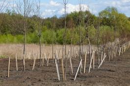 В Калининградской области за год высадили миллион деревьев