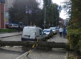На улице Тюленина в Калининграде на машину упало дерево