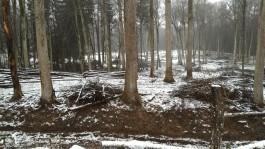 СК: Экс-инспектор областного агентства по охране лесов согласовала крупную вырубку в Виштынецком парке