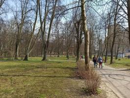 Дятлова рассказала, когда на улице Киевской в Калининграде появится ландшафтный парк