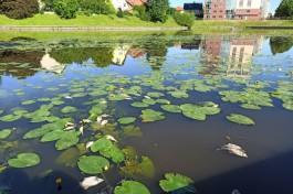 «Гидротехник» проверит стоки в Верхнее озеро Калининграда после гибели рыбы