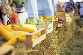 Из-за проблем в сельском хозяйстве власти планируют отменить День балтийского поля