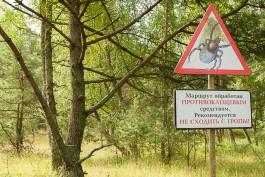 За неделю в Калининградской области пострадали от укусов клещей более 140 человек