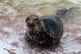 Калининградские общественники выиграли грант на создание реабилитационного центра для тюленей