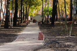 Прокуратура приостановила вырубку деревьев рядом с гурьевским парком