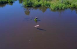 Калининградец снял с помощью дрона фильм про орланов-белохвостов