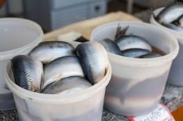 На территории Калининградского порта будут торговать рыбой из Мурманска и Дальнего Востока