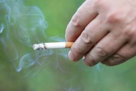 Полицейские нашли 52 тысячи пачек подпольных сигарет в двух торговых павильонах Калининграда