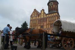 «Лошади несут мир»: как в Калининграде встречали международную конную экспедицию из Германии