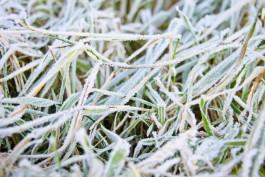 В выходные в Калининградской области ожидаются ночные заморозки