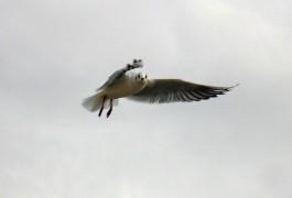 На берегу Куршского залива в Литве планируют окольцевать рекордное количество птиц