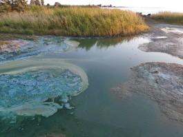 «Вода как химический гель»: жители сообщили о загрязнении Калининградского залива