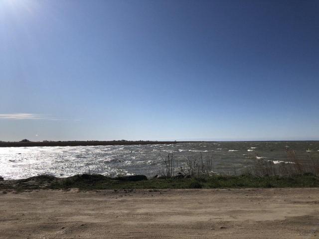 «Ветром занесло»: в Калининградском заливе заметили ушастых медуз