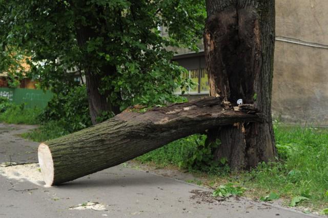 31мая упавшие отсильного ветра деревья повредили 7 авто