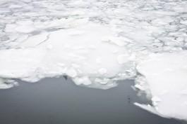 В Куршском заливе автомобиль с людьми провалился под лёд