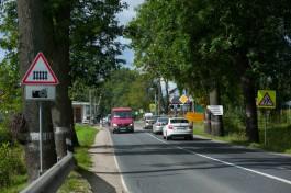 Экскурсовод: Люди едут в Калининградскую область из-за придорожных аллей, а их вырубают