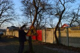 Власти: Калининградцы могут безбоязненно сдирать рекламные объявления с деревьев