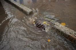 «Преголя или ливнёвки»: в Калининграде по неизвестным причинам затопило улицу Буткова