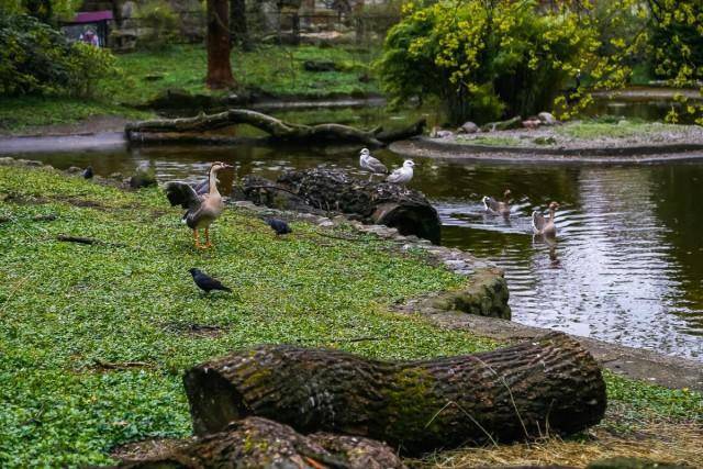 Ночью в калининградском зоопарке погибли 18 птиц