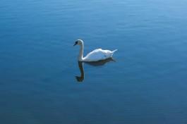 В «Водоканале» призвали калининградцев бережно относиться к питьевым озёрам