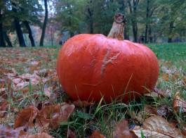 В Зеленоградске отпразднуют День оранжевой тыквы