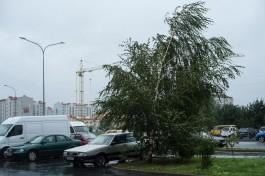 МЧС предупреждает об усилении ветра в Калининградской области