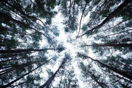 В лесу под Калининградом всю ночь искали пропавшего 12-летнего мальчика