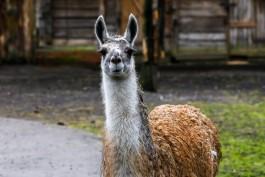 Калининградский зоопарк закроют с 28 октября по 7 ноября