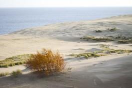 На Куршской косе возобновят водные прогулки по заливу