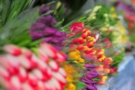 К 8 Марта в Калининградскую область завезли более 2,5 миллионов цветов