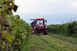 «Плантации на вырост»: как собирают и продают ягоды в Калининградской области