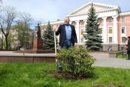 Мельников пересадил рододендроны с площади Победы