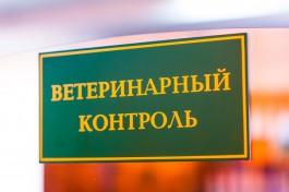 В Калининградскую область не пустили 21 тонну свиного шпика из Сербии