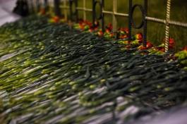 В субботу в Балтийске пройдут праздничные мероприятия в честь Дня защитника Отечества