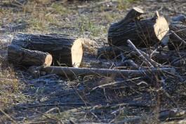 Для строительства четырёхэтажного дома в районе улицы Донского вырубят 29 деревьев